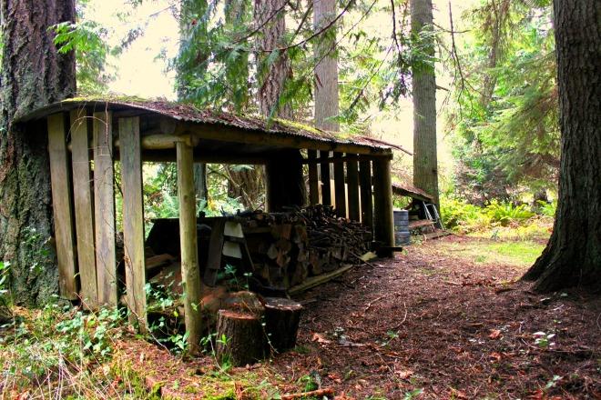 IMG_3737 woodpile