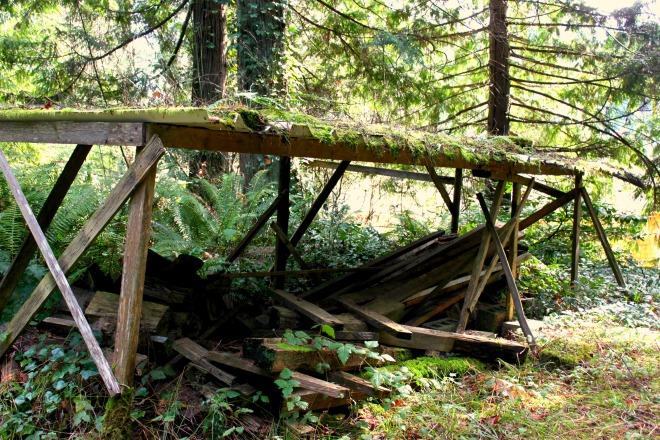 IMG_3738 woodpile