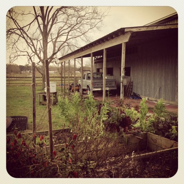 Farm11813
