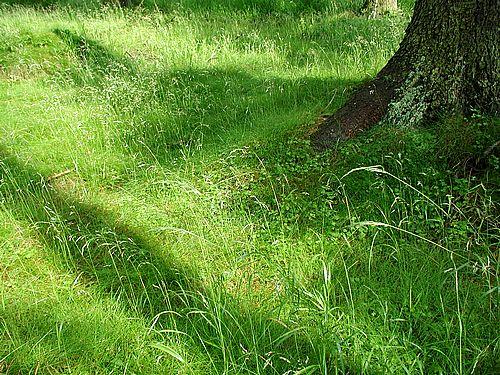 grass-8