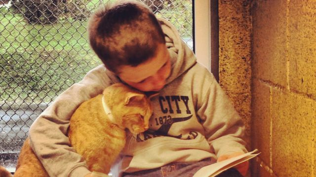 Photo-of-boy-reading-to-cat-attracts-national-attention